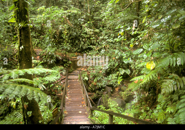 Dominica West Indies Caribbean boardwalk walkway to Emerald Pool - Stock Image