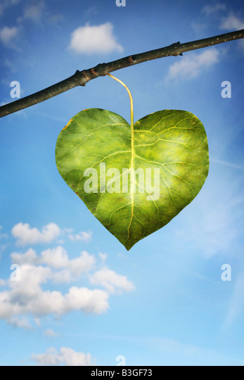 single leaf in the shape of a heart - Stock Image