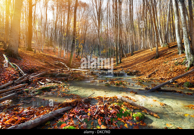 Wild mountain river in the autumn forest - Stock Image