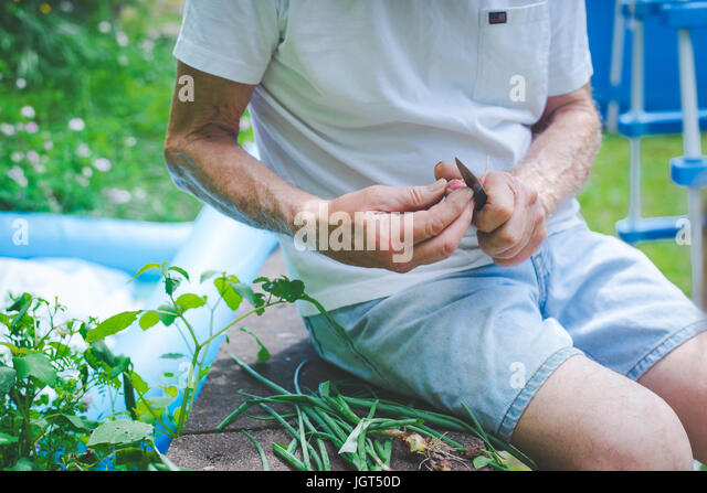Older man cutting the tops off of onions. - Stock Image