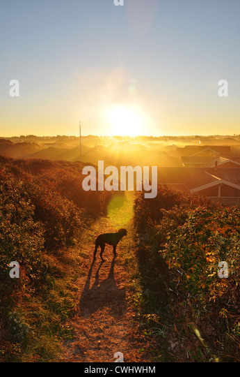 sunrise,morning mood - Stock Image