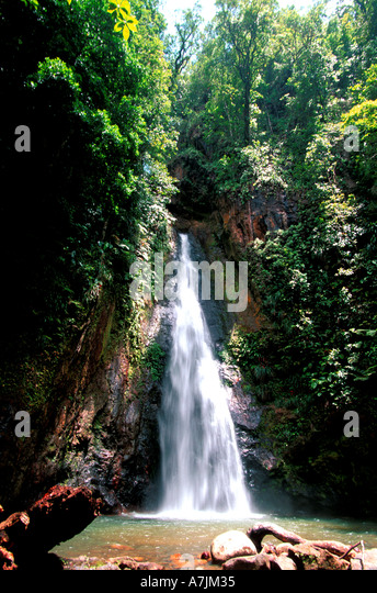 Dominica Milton Falls waterfall on way to Syndicate Trail, caribbean island dominica rainforest - Stock Image