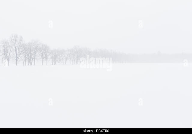 trees in winter landscape - Stock Image
