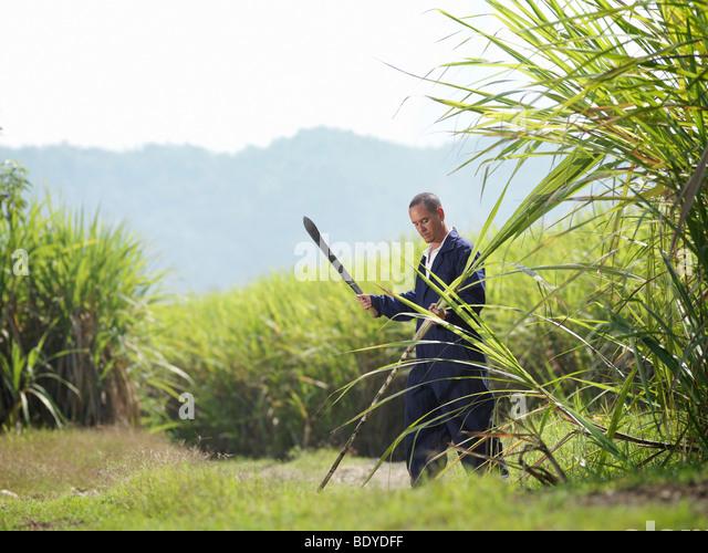 Worker Harvesting Sugar Cane - Stock Image