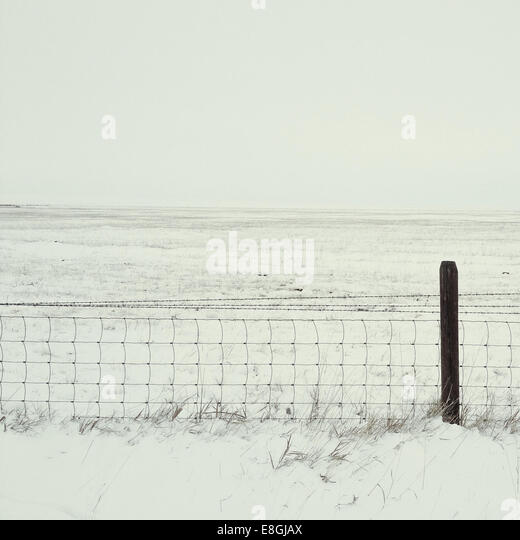 Field of snow - Stock Image