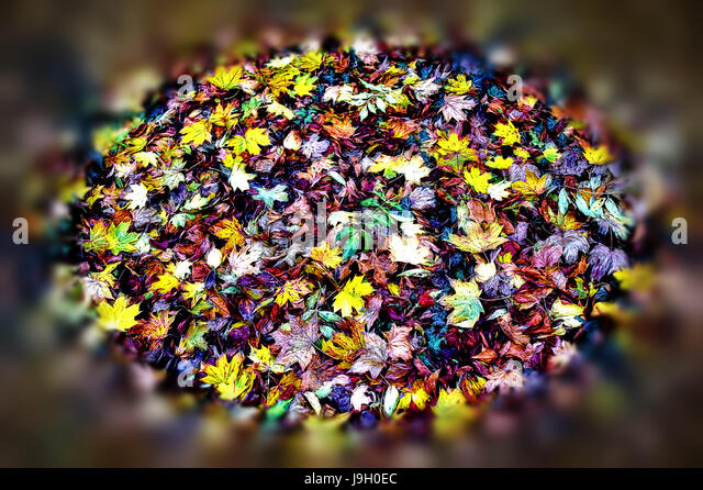 A Bouquet Of Autumn - Stock Image