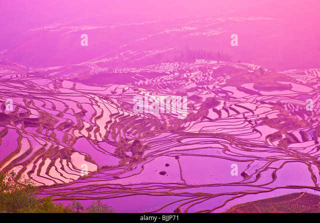 Yuan Yang rice terraces, Peoples Republic of China, Yunnan Province, Near, Vietnamese border, UNESCO Wold Heritage - Stock Image