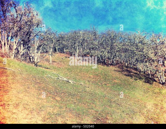Hillside with trees - Stock-Bilder