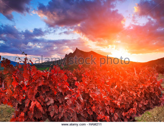 Majestic landscape with vineyards at sunset. - Stock Image