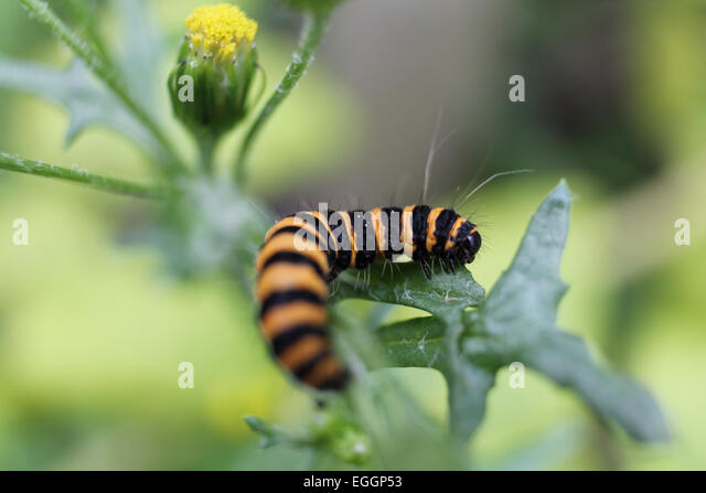 Caterpillar - Stock Image