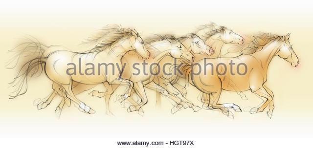 Wild horses running - Stock-Bilder