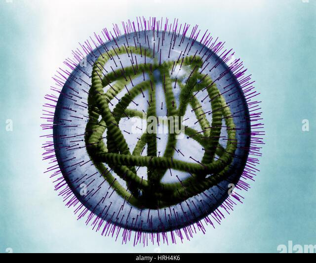 Measles virus - Stock Image