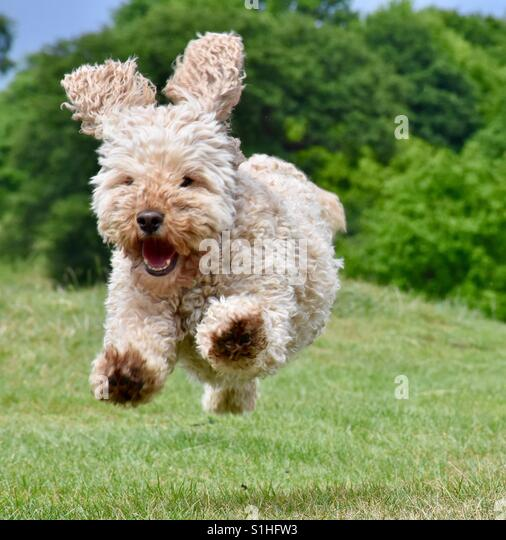 Bertie in his happy place - Stock Image