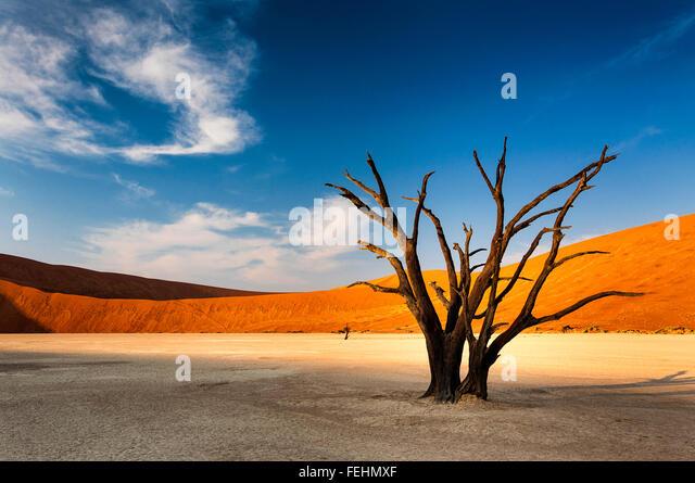 Dead tree in Sossusvlei, in the Namib Desert, Namibia - Stock Image