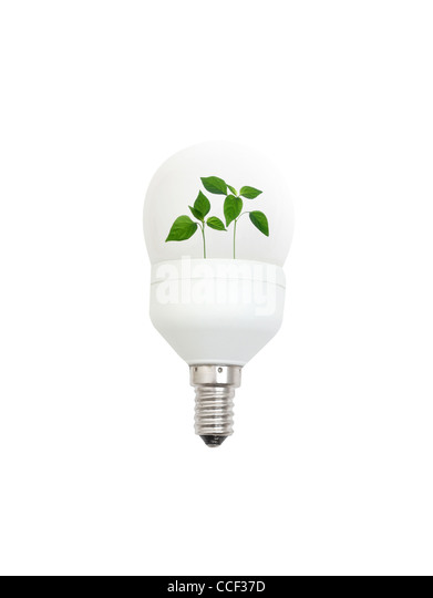 Light bulb with leaves - Stock Image