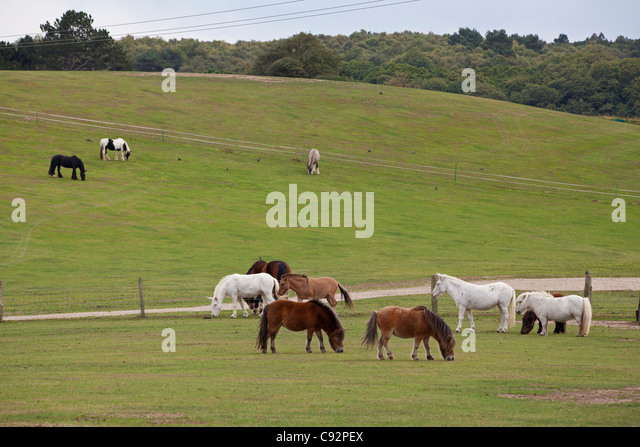 Horses in fields at Hillside Animal Sanctuary in Norfolk - Stock Image
