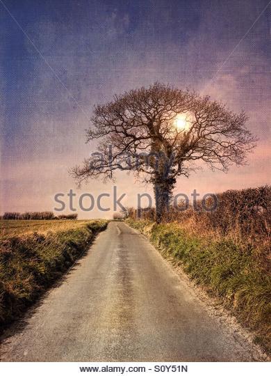 Tree in Country Lane, Goodnestone, Kent - Stock Image