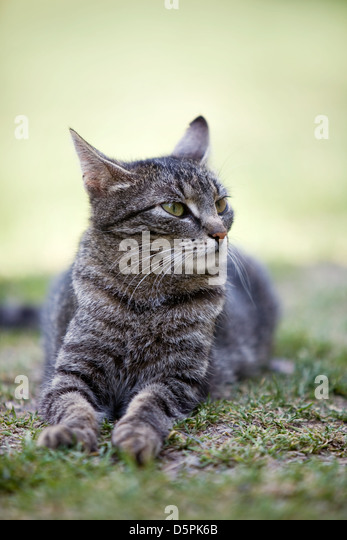 Cat laying on green grass - Stock-Bilder