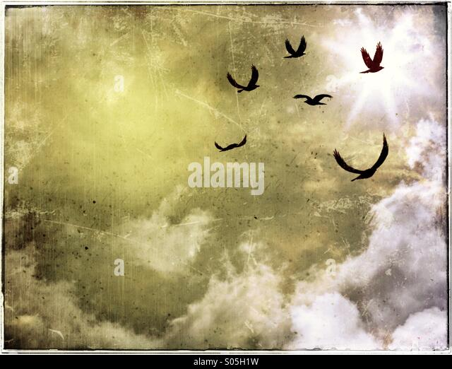 Birds Soar Up Towards The Sun On A Dramatic Sky - Stock Image