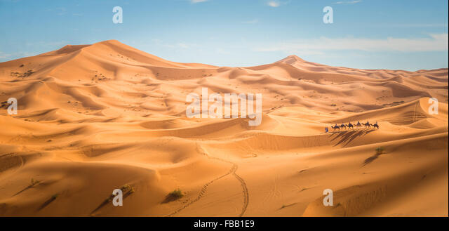 Camel trek through Saharan Dunes, Erg Chebbi Morocco - Stock Image