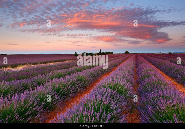 Sunrise with beautiful clouds over lavender field, Provence - France - Stock Image