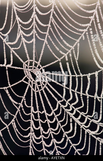 Frozen spiders web - Stock Image