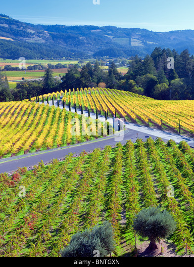 View of vineyards in front of Castello di Amorosa. Napa Valley, California. Property released - Stock Image