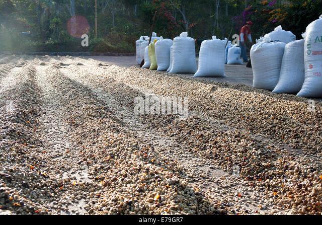 Buy Property In El Salvador Ruta De Las Flores