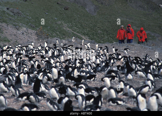 ANTARCTICA Adelie penguins King George Island - Stock Image