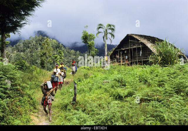 Expedition to the Arfak Mountains, Indonesia, New Guinea, West Papua - Stock Image