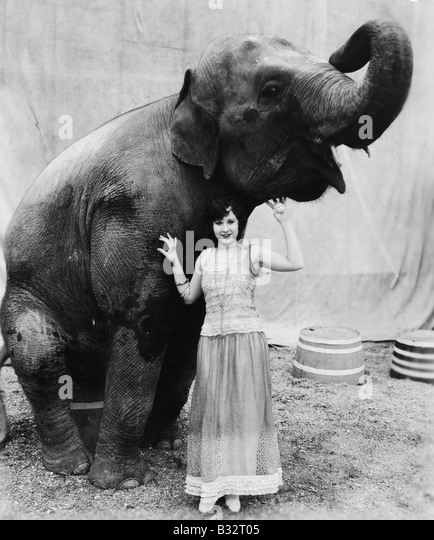 Portrait of a young woman standing under an elephant - Stock Image