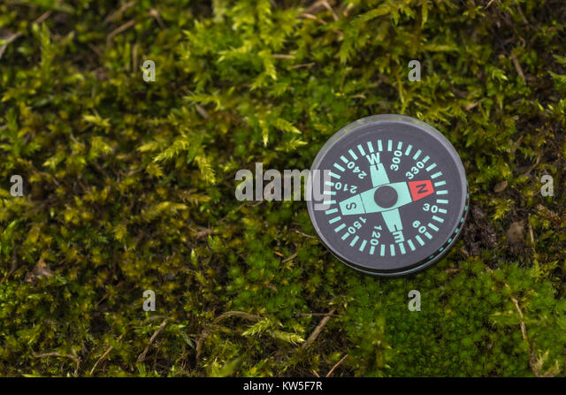 Compass - metaphor for business 'direction', navigation, moral compass, getting your bearings concept, orienteering - Stock Image