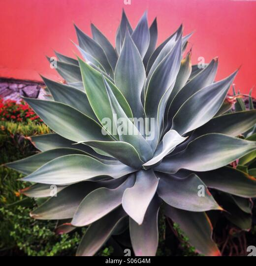 Nice plant - Stock Image