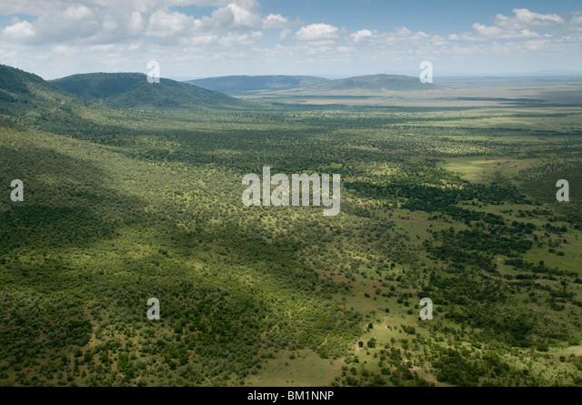 Masai Mara National Reserve, Kenya, East Africa, Africa - Stock Image