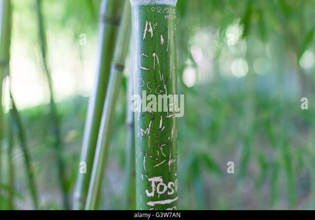 Cane France - Stock Image