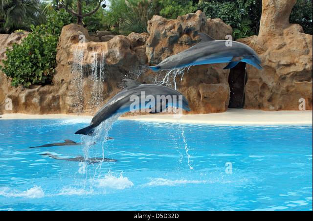 Puerto de la Cruz, Spain, dolphins at Loro Park - Stock Image