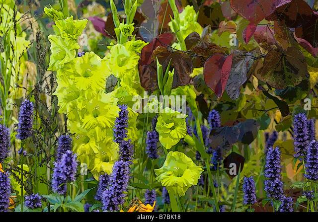 AUTUMN PLANTS IN ASSOCIATION - Stock Image