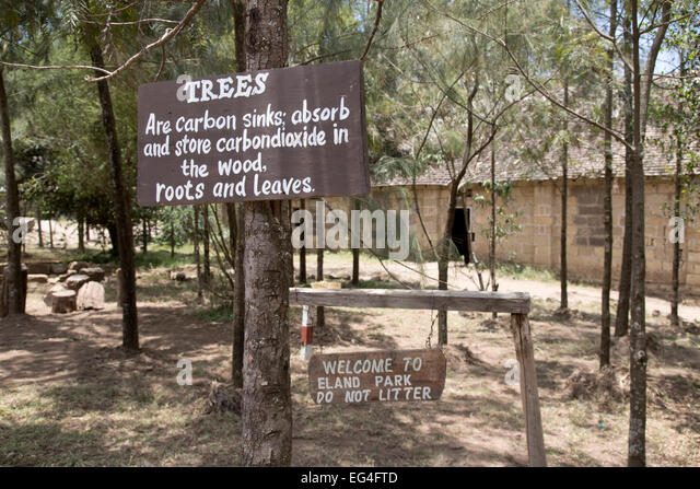 Notice trees absorb carbon dioxide Lungalunga Primary School Gilgil Kenya - Stock Image