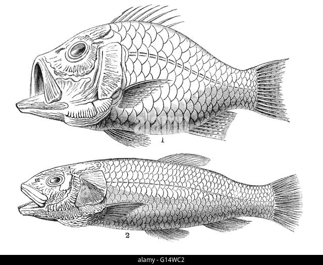 Cretaceous period fish stock photos cretaceous period for Examples of fish