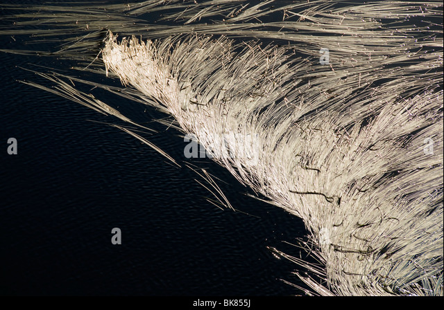 Reeds floating on a mountain tarn, Snowdonia, North Wales, UK - Stock Image
