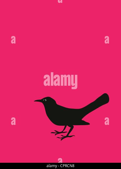 One blackbird on a pink background. - Stock-Bilder