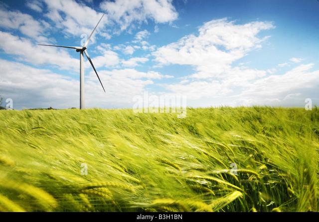 wind turbine in a wheat field - Stock Image