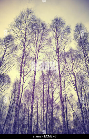 Looking up through trees, retro filtered background. - Stock Image