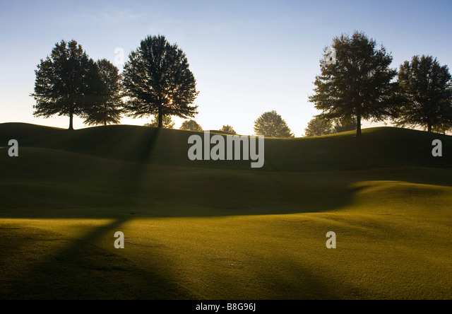 Sunrise Tree Silhouette in Franklin Tennessee USA - Stock-Bilder