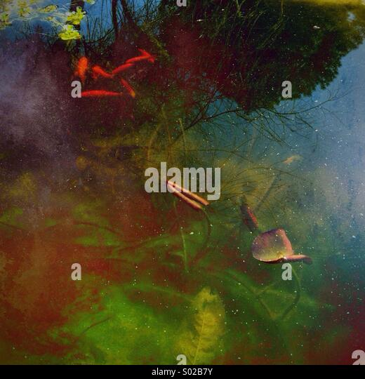 Underwater world in Garden pond - Stock Image