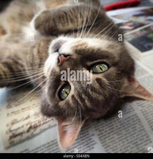 Upside-down cat - Stock Image