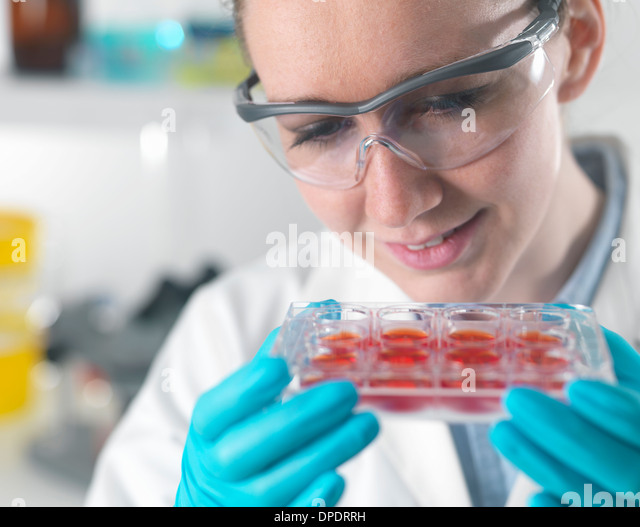 Female scientist examining stem cell cultures in laboratory - Stock-Bilder