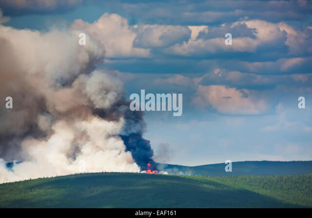 Smoke,Destruction,Alaska,Forest Fire,Forest - Stock Image