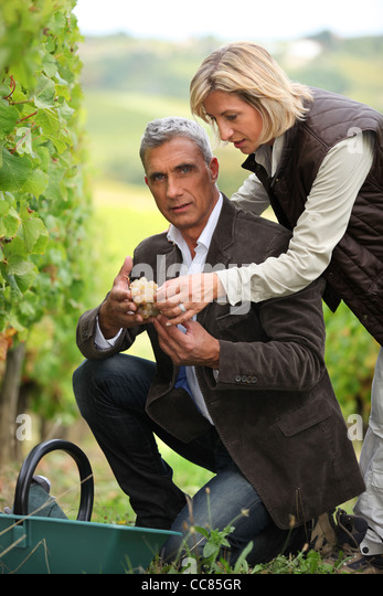 Couple picking grapes together - Stock Image