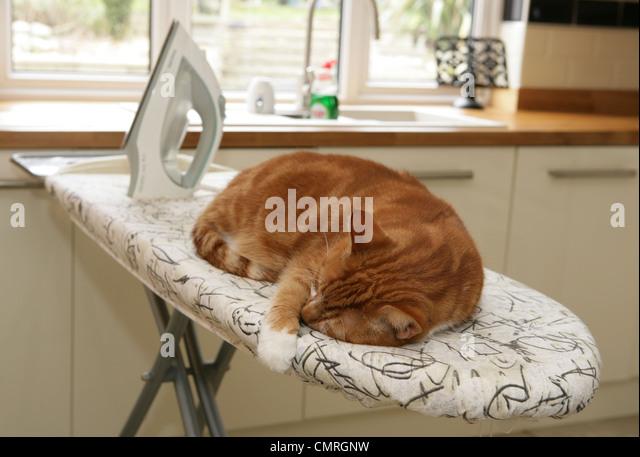 Domestic cat Single adult sleeping on an ironing board Uk - Stock Image